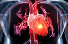 Những thói quen tốt cho trái tim