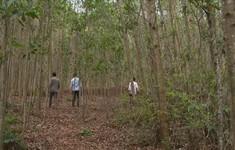 Quảng Nam: Người dân phản đối khai thác quặng tại Núi Mun