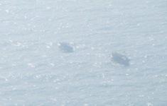 Sóng lớn đánh chìm 2 tàu cá ở Cà Mau, 1 ngư dân mất tích
