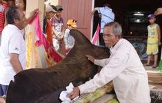 Cá voi liên tục lụy vào bờ biển Quảng Ngãi