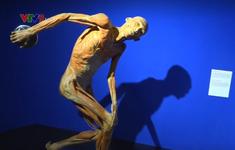 Độc đáo triển lãm cơ thể người thật đầu tiên tại Việt Nam