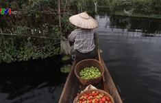 Khám phá vườn nổi Inle ở Myanmar