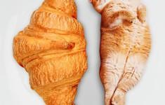 Khi mèo và bánh được kết hợp bằng photoshop