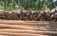 Gia tăng vận chuyển cây cồn trái phép làm lồng bè nuôi tôm
