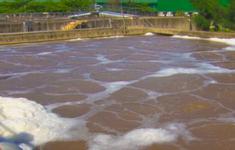 Quảng Ngãi: Người dân khốn khổ vì Trạm xử lý nước thải KCN Quảng Phú ô nhiễm