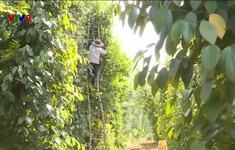 Quảng Trị đẩy mạnh liên kết thu hoạch nông sản