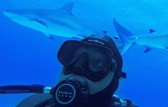Hai em nhỏ bị cá mập tấn công khi tắm biển tại Mỹ