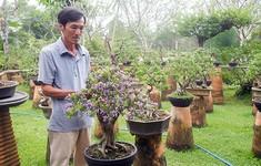 Nâng cao hiệu quả mô hình hợp tác xã nông nghiệp kiểu mới