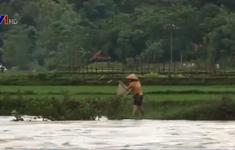 Nghệ An: Người dân bất chấp nguy hiểm vớt cá sau lũ