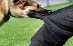 Nguy hiểm tình trạng chó tấn công trẻ nhỏ