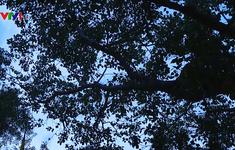 Sri Lanka trao tặng cây bồ đề thiêng cho Việt Nam