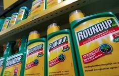 Cảnh báo về lạm dụng chất diệt cỏ glyphosate ở Việt Nam nhìn từ phiên tòa cáo buộc công ty Monsanto của Mỹ