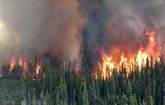 Canada ban bố tình trạng khẩn cấp vì cháy rừng