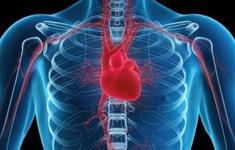 Những thói quen giúp người trẻ tránh xa bệnh tim mạch