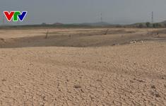 Bình Thuận: Hơn 5000 ha cây trồng thiệt hại do nắng hạn