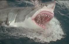 Cận cảnh nhà khoa học suýt bị cá mập ăn thịt