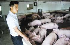 Tổ chức tập huấn phòng chống dịch tả lợn châu Phi cho nông dân tại TP.HCM