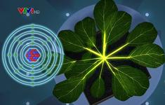 Thực vật biết truyền tín hiệu cảnh báo nguy hiểm