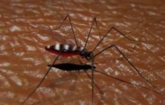 Dùng trí tuệ nhân tạo diệt muỗi gây bệnh