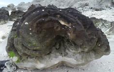"""Kỳ thú """"hoa"""" san hô hóa thạch 6.000 năm tuổi"""