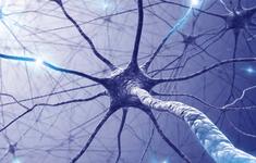 Lần đầu phát triển thành công dây thần kinh nhân tạo