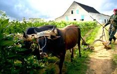 Chính sách đất đai mới của Cuba đem lại lợi ích cho nông dân