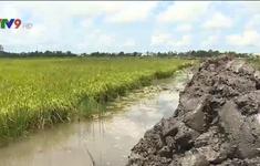 Kiên Giang quyết tâm bảo vệ 30.000ha lúa bị lũ uy hiếp