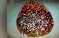 Phát triển thành công mạch máu 3D giúp chữa trị bệnh