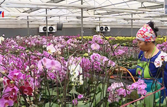 Bí kíp chọn hoa ngày Tết vừa rẻ vừa kinh tế