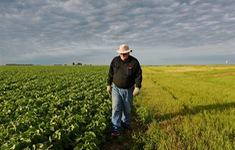 """Ngành nông nghiệp Mỹ """"ngấm đòn"""" trả đũa thương mại"""