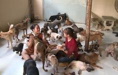 Nuôi hàng trăm chú chó tại SaigonTimes
