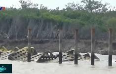Cà Mau: Kè chống sạt lở bảo vệ bờ biển làm chưa xong đã hỏng