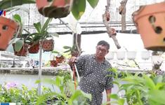 Người đàn ông chi hơn 400 triệu đồng trồng lan... tặng vợ