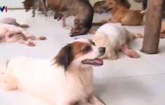 Mái ấm của những chú chó, mèo bị bỏ rơi