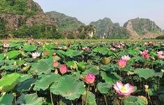 """Lúa trải vàng, sen nở rộ giữa thu ở """"thánh địa sống ảo Ninh Binh"""""""