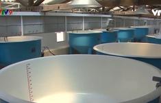 Xây dựng thành công vùng sản xuất tôm an toàn dịch bệnh