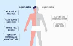 Tỷ lệ vàng của lợi khuẩn và hại khuẩn trong đường ruột con người