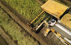 Tương lai nông nghiệp: Cần hài hòa giữa canh tác nông nghiệp và bảo vệ môi trường