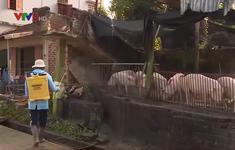 Bình Định: Tăng cường phòng chống dịch bệnh gia súc, gia cầm