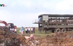 Hà Tĩnh: Khó kiểm soát dịch tả lợn châu Phi