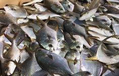 Giảm thiệt hại cho người nuôi thủy sản mùa mưa bão
