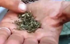 Hiểm họa ma túy giá rẻ ở Hy Lạp
