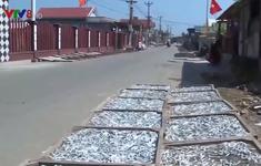 Quảng Trị: Ô nhiễm từ các cơ sở hấp sấy cá