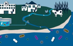 Cảnh báo các loại thuốc gây nhiều nguy cơ tiềm ẩn với môi trường