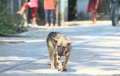 Khánh Hòa: Bùng phát bệnh sán chó