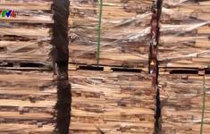 Thu giữ lô hàng gỗ xẻ trốn thuế trị giá 11 tỷ đồng ở TP.HCM