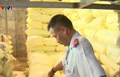 Phạt 80 triệu đồng doanh nghiệp sản xuất lúa giống trái phép ở An Giang