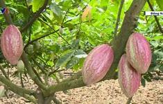Đồng Nai: Chuyển đổi cây trồng giúp nông dân tăng thu nhập 23 lần