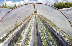 Trung Quốc hạn chế tấm màng phủ nhựa trong nông nghiệp