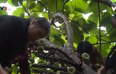 Thừa Thiên - Huế hỗ trợ cây giống cho người dân vùng đệm